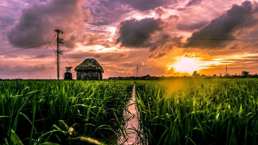 Sky Plant Field