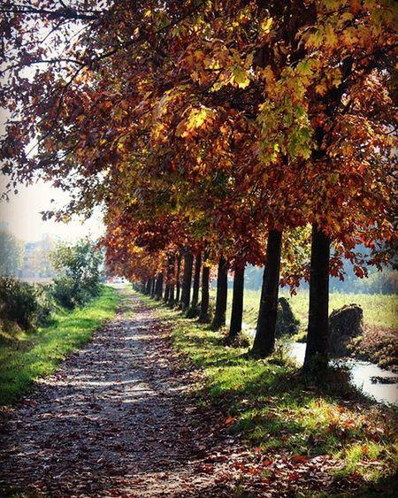 Autumn Autunno  Castelleone Coloridellautunno Foglie Nature Instanature Lombardia Fotografia Canon Canon_photos Strada Campagna Fotoclubcastelleone