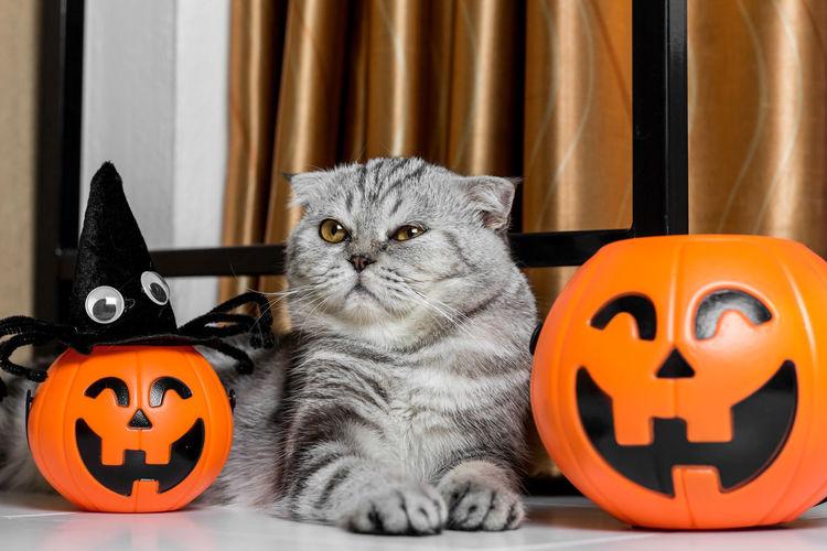 Cat sitting on a pumpkin