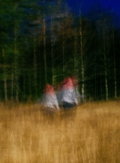 Digital composite image of trees on field in forest
