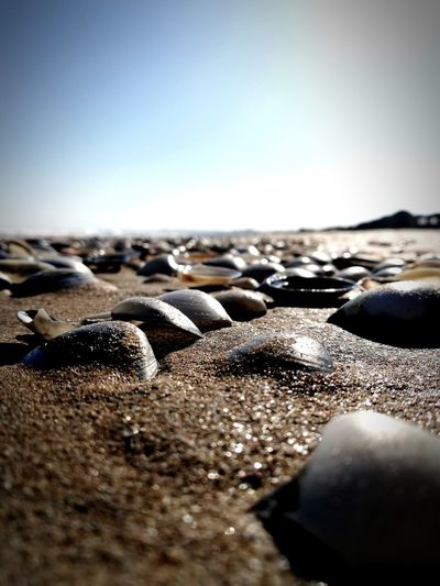 Surface level of stones on beach against clear sky