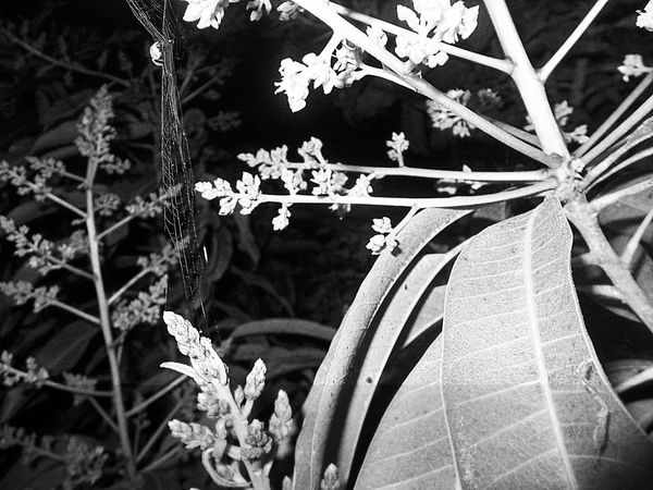 Spider Night Nature Blackandwhite