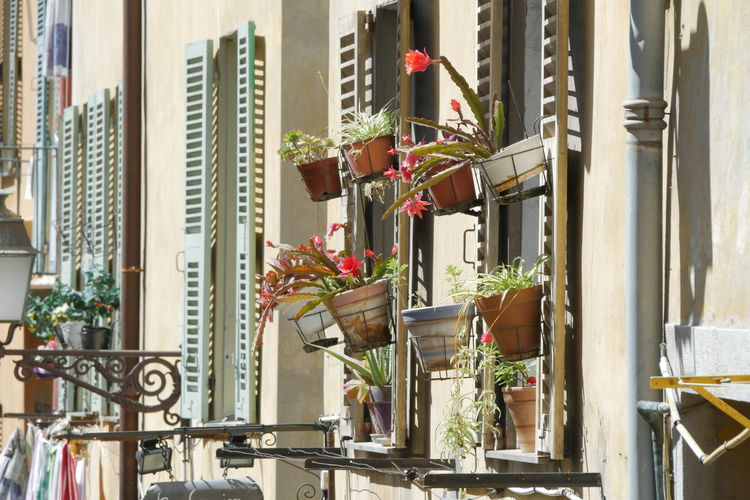 Potted plant in city