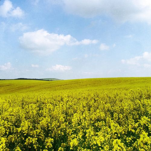 Spring Into Spring Love To Travel Countryside Field Of Rapeseed Blue Sky