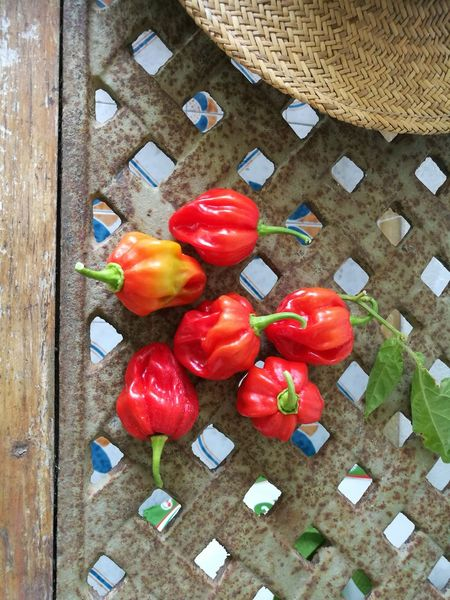 Freshness Food Habanero Peppers Healthy Eating Close-up Red Day No People