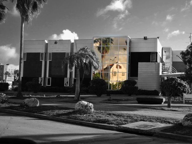 City Outdoors From My Point Of View Reflections In The Glass Windows Architecture Photography Travel Destinations (c) 2016 Shangita Bose All Rights Reserved Curacao Willemstad Otrabanda Mirror Reflection Trees Shrubs Black And White Monochrome Colorsplash Snbcuracao Adapted To The City