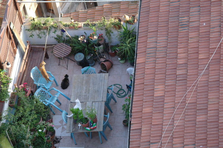 Cats 🐱 Plant Outdoors Day Potted Plant Architecture Growth No People Built Structure Building Exterior NoEditNoFilter EyeEm EyeEm Gallery First Eyeem Photo Animal Cat♡ Cat Lovers Cats Of EyeEm Secret Garden Secret Spaces Secretgarden Eyeemphotography Breathing Space Mezzomix Mix Yourself A Good Time