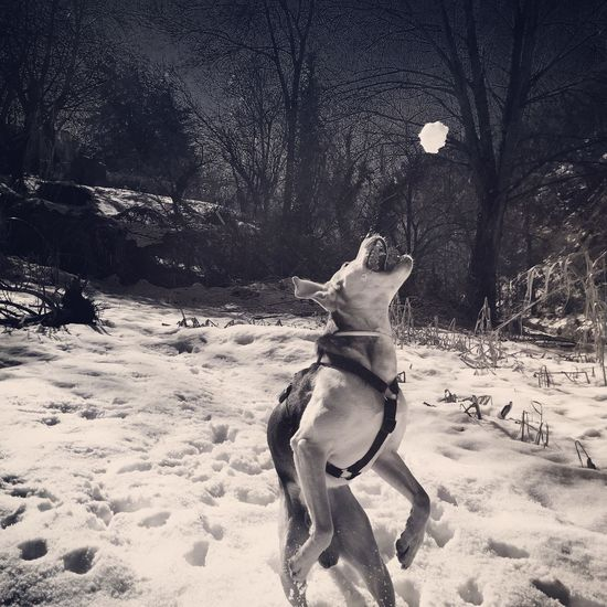 I Love My Dog Black And White Dog Eye4photography