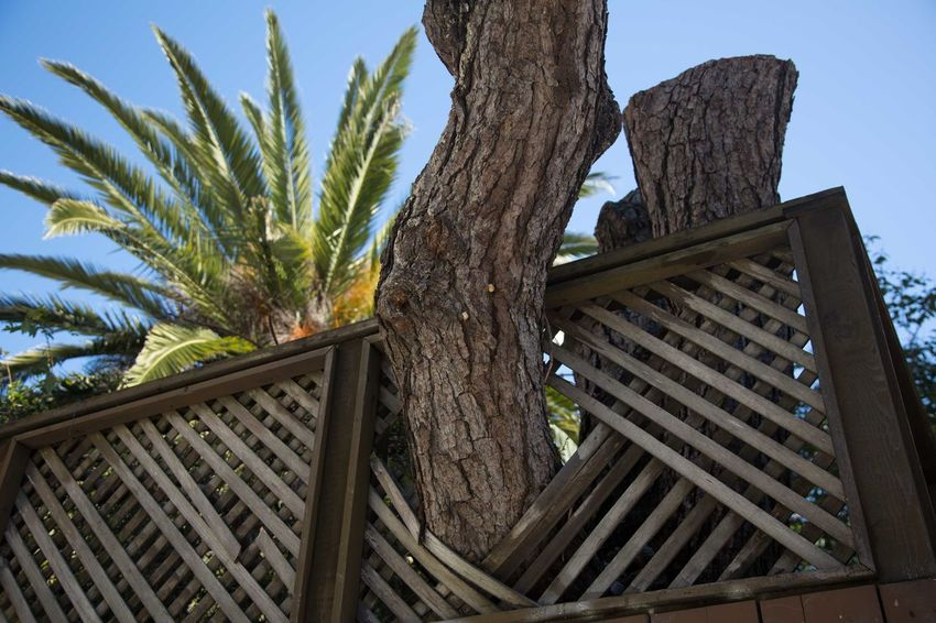 City City Life Growing Growth Nature Porch Tree USA Photos Califonia Day Fence Outdoors Tree Tree Trunk Wood - Material