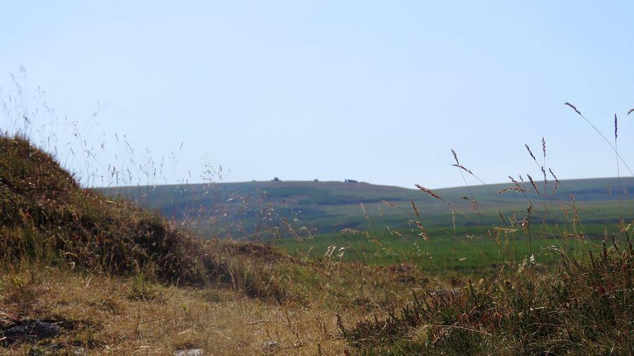 Nature Dartmoor