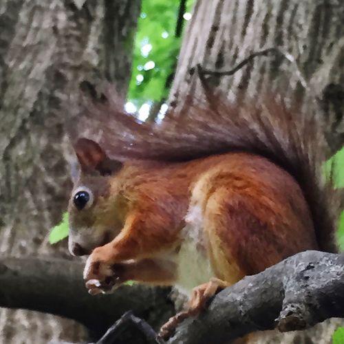 IPS2016Nature Squirrel