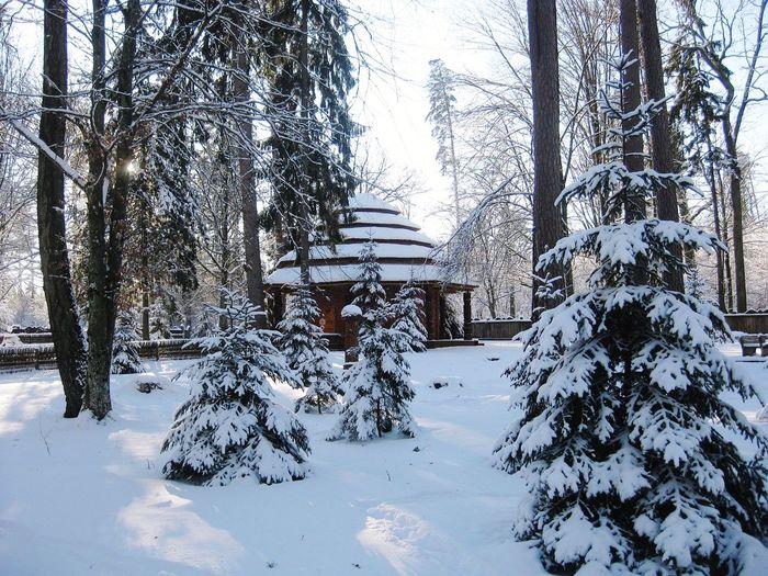 Winter arbor. Tree Water Snow Cold Temperature Winter Puddle Sky Architecture Bare Tree