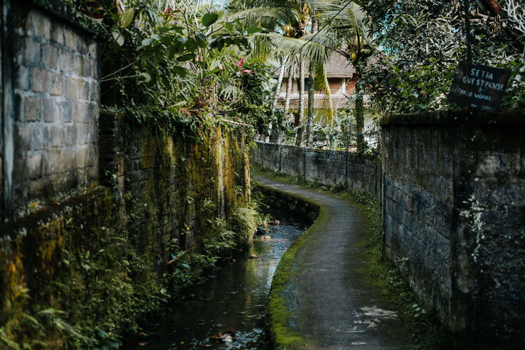 A small road in the center of Ubud. Water Plant Tree Architecture Built Structure Nature No People Building Exterior Day Outdoors Growth Building Beauty In Nature Waterfall Green Color Motion Forest Foliage Waterfront Canal Flowing Water Flowing Street Jungle