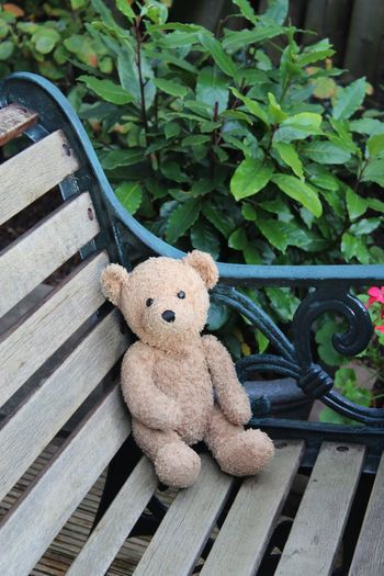 Teddy Bear Toy Stuffed Toy Childhood Day No People Outdoors Close-up Bench Seat