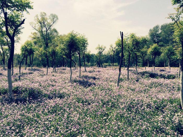 午后阳光,蓝天白云,绿树,花丛。感恩生活在这片天空下。