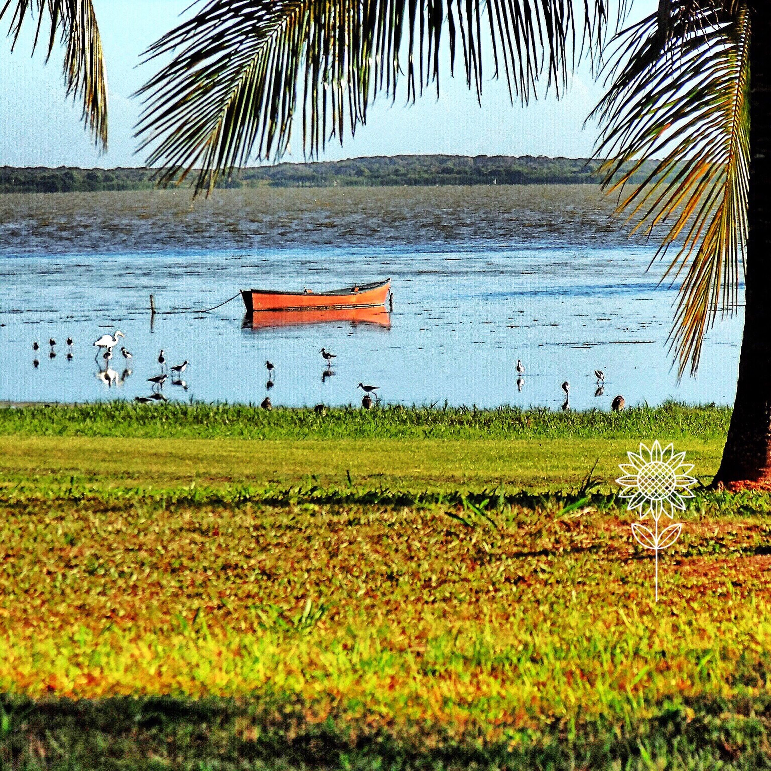 water, grass, tranquil scene, tranquility, lake, nature, beauty in nature, scenics, growth, plant, tree, flower, lakeshore, clear sky, field, sky, no people, idyllic, day, outdoors