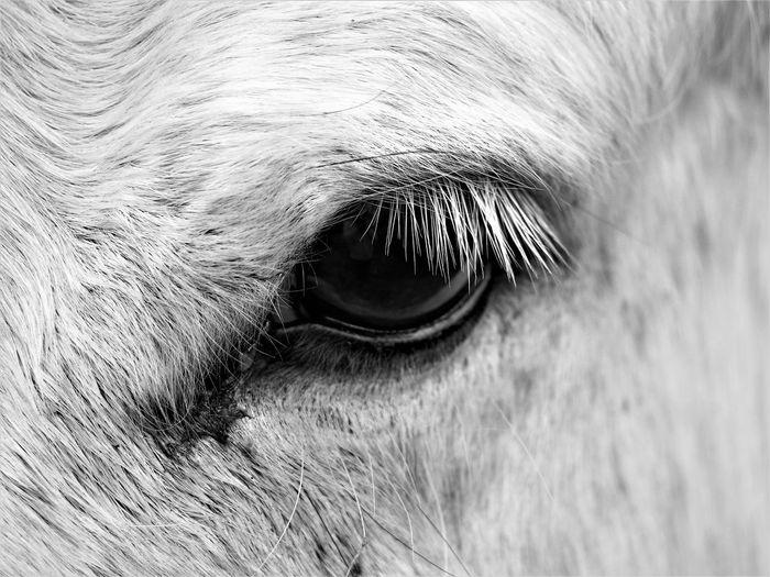 Animal Eye Pets Eye Animal Hair Animal Body Part Animal Day Horse Eyeball Herbivorous Eyelash Close-up One Animal Animal Themes Extreme Close-up No People Domestic Animals