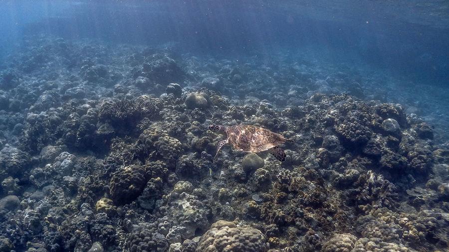 High angle view of fish swimming underwater