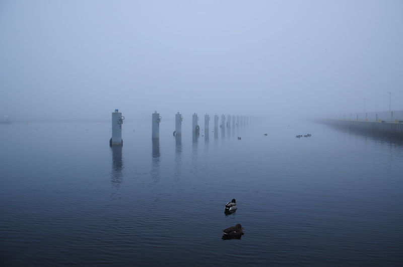 Ducks swimming in lake against sky during foggy weather