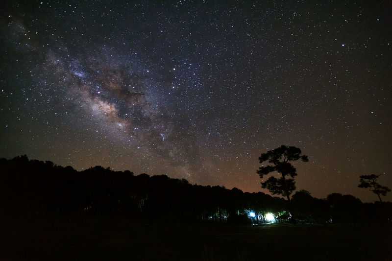 Silhouette Forest Against Star Field At Night