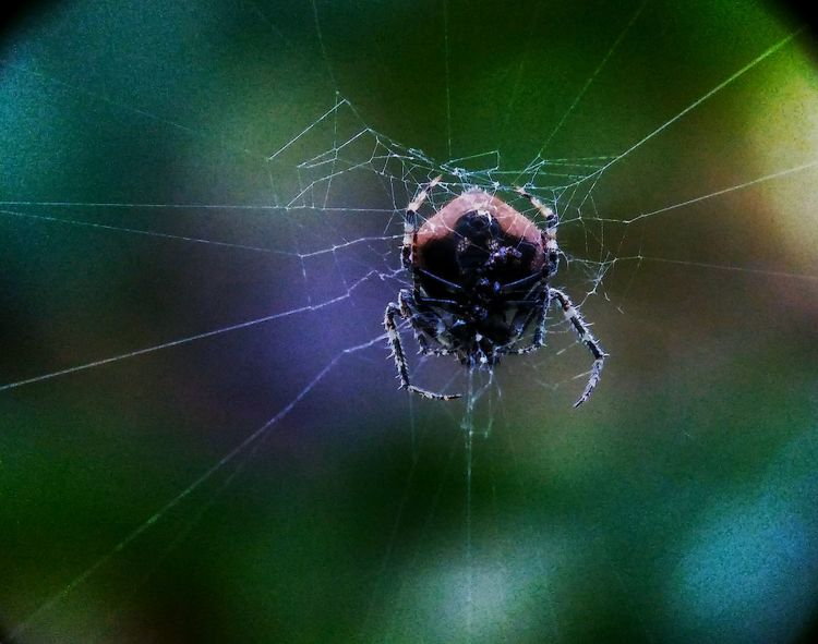 Taking Photos Super Macro Close-up Macro Photography Check This Out Beauty In Nature Fauna_collection Outdoors Nature Bugs Life Spider Baby Spiders
