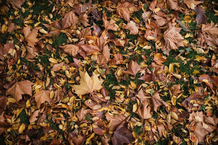 Full frame shot of plants during autumn