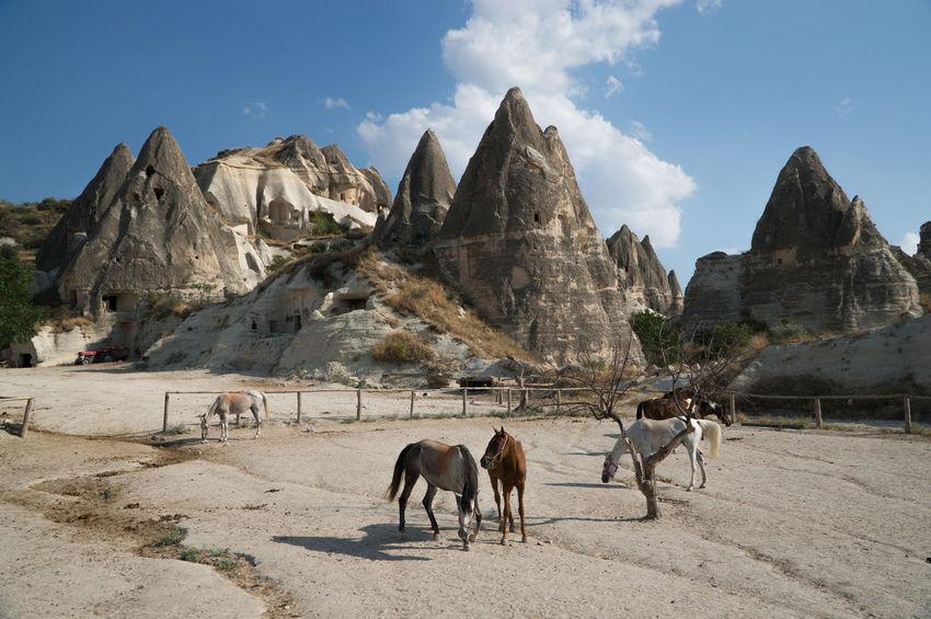 Anatolia Anatolian Road Ani Site Ani Turkey Ararat Mountain Cappadocia Cows In A Field Dalaman Kars Mount Olympus Sumela Monastery Sümela Manastırı Tortum Lake Turchia Turkey
