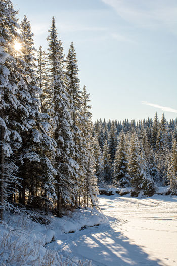 Snow covered land and trees against sky