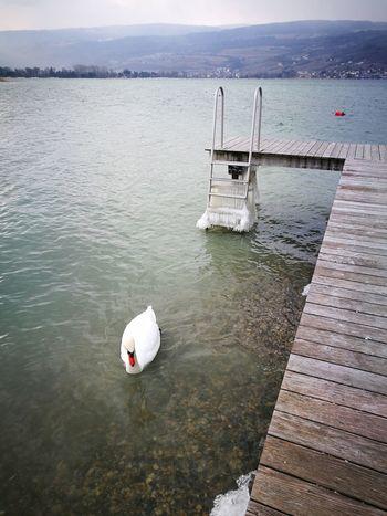 Cygne Water Wind Snow Ice Day Nautical Vessel