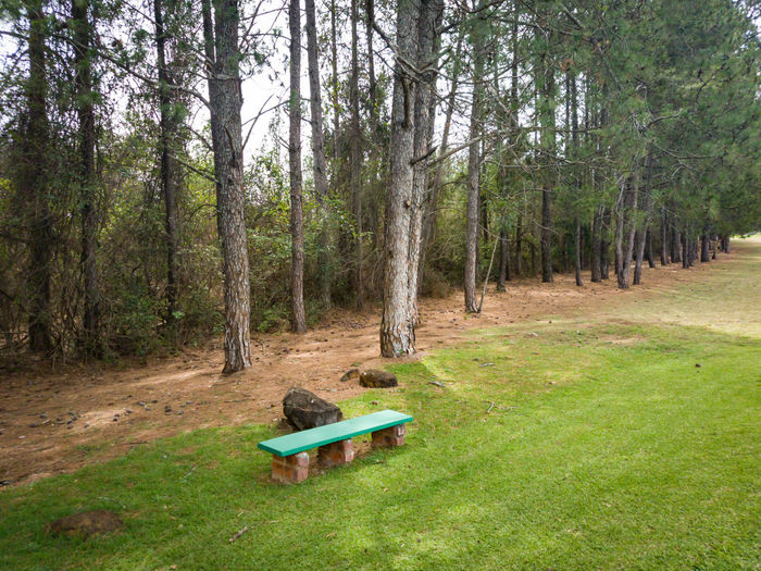 bench at the tee box Waiting Sitting Game Golf Course Golf Club Bench Tee Box Grass Outdoors Day Golf Golfing Tree Forest Sky Grass Needle - Plant Part Pinaceae Pine Tree Tree Trunk Bark Pine Wood Pine Cone Woods Growing