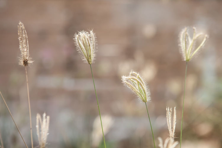 Close-up of stalks on field against blurred background