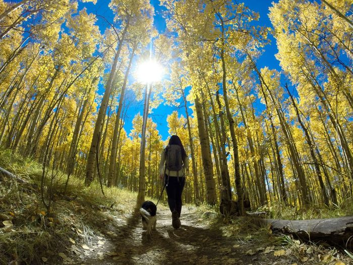 Aspen Aspen Forest Aspen Trees Autumn Autumn Colors Autumn Leaves Beauty In Nature Dog Fall Fall Beauty Fall Colors Fall Leaves Forest Forest Photography Hiking King Charles Cavalier Outdoors Spaniel Sun Through Leaves Sun Through The Trees Woman And Dog Woman In Nature Women Women Around The World The Great Outdoors - 2017 EyeEm Awards Lost In The Landscape Perspectives On Nature