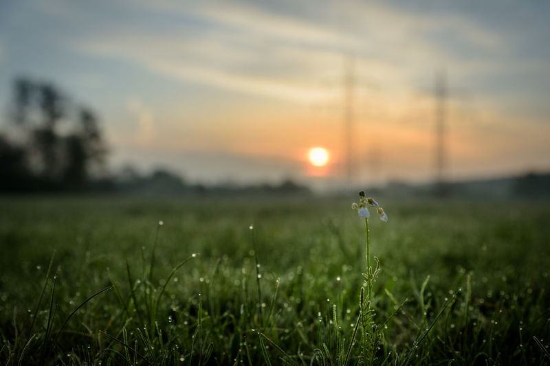 sunrise at the field Morning Morning Light Beauty In Nature Close-up Field Grass Growth Landscape Nature No People Outdoors Scenics Sky Sunrise Tranquil Scene Tranquility