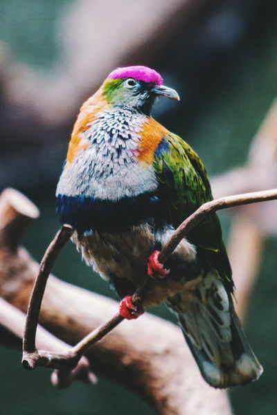 Chester Zoo Colors Colorful Fancy Animal Nature Zoo Wildlife Bird Perching Multi Colored Close-up