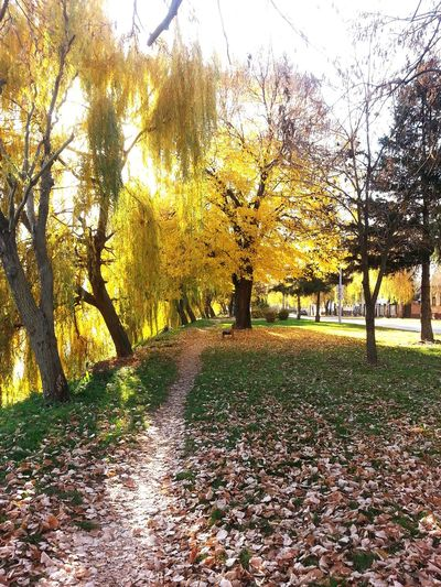Tree Nature Growth Grass Day Outdoors Beauty In Nature Green Color Tranquility No People Scenics Sky Tree Gold Nature Autumn Collection Autumn Colors Autumn 2015 Beauty In Nature Autumn Reflection