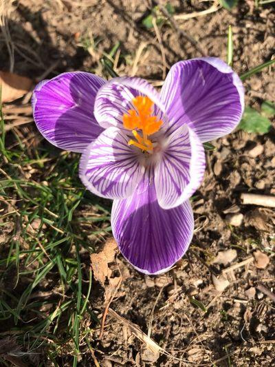 #fleurs #nature