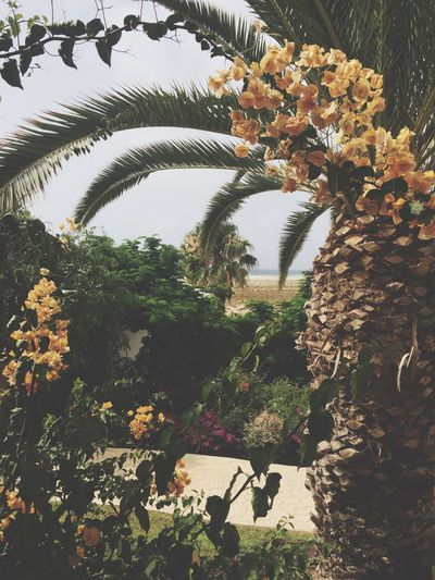 Paradise Vacation in Fuerteventura
