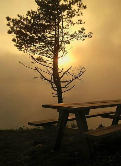 My dawn Tree Sunset Nature Fog Mountain Romantic Sky Beauty In Nature Romantic❤ Dawn Tramonto Nebbia Sole Panchinavuota Love