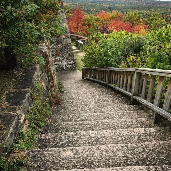 Nature Beauty In Nature Outdoors Tranquility The Way Forward Stairways