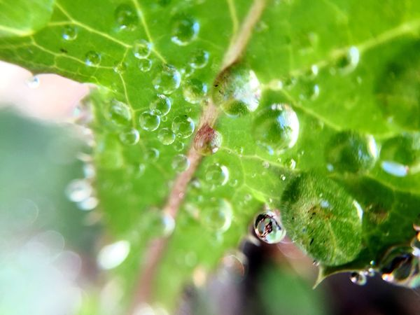 Taking Photos Learn & Shoot: Single Light Source IPS2016Nature Macro_collection Waterdrops Nature Learn & Shoot: Simplicity Nature On Your Doorstep Close-up