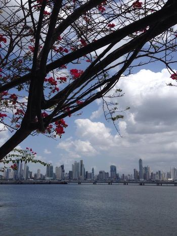 Panamá Panama City PanamaCity Panama City Panama Skyscraper Skyline Ocean Atlantic Ocean Tropical Tropical Climate Tropical Dream Trees Flowers