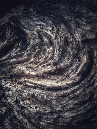 Torsion Wood Tree Tadaa Community Full Frame Backgrounds No People Nature Pattern Day Outdoors Textured  Beauty In Nature Close-up Rippled Abstract