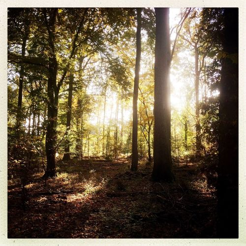 Dog Walking Woodland Walks Autumn Forest Photography