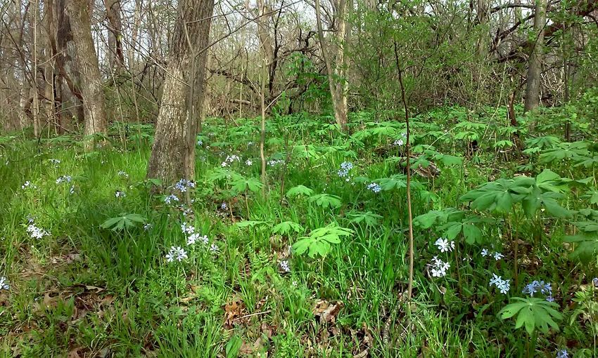 Woods Nature