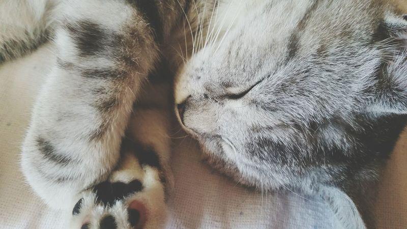 Cat Germany Miau Sweet Knuffig Putzig