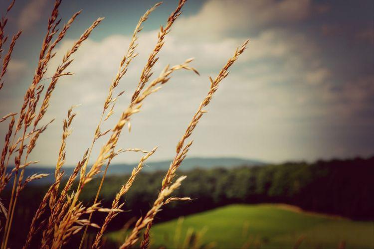 Landscape Eye4nature Summer Bokeh
