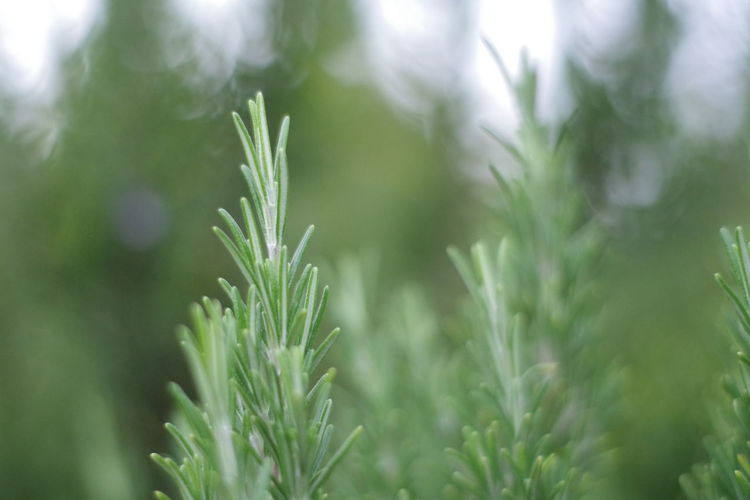 Close-up of dew on plant