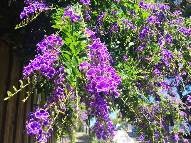 Flower Purple Growth Freshness Beauty In Nature Nature Fragility No People Plant Blooming Outdoors Low Angle View Day Lilac