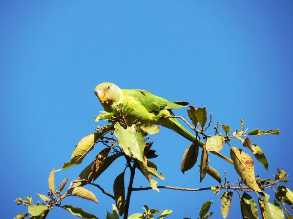 Bird Bird Photography Green Color Withouteffect WithoutEditing