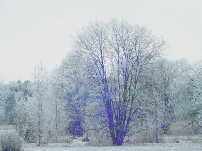 Shades Of Winter Snow Covered Frozen Plant Beautiful Nature Cold Weather Frozen Nature Winter Nature Day Nature Beauty Naturephotography Winter Trees Tree Bare Tree Nature Beauty In Nature Forest Cold Temperature Snow Winter No People Outdoors Landscape Scenics Freshness Sky